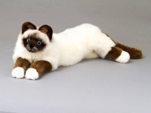 """Kösen - Birma-Katze """"Sina"""", liegend"""