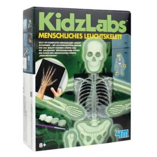 Ludibrium-4M KidzLabs - Menschliches Leuchtskelett